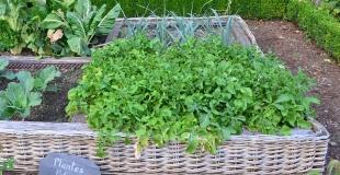 Installer un carré potager pour un mini-jardin en ville