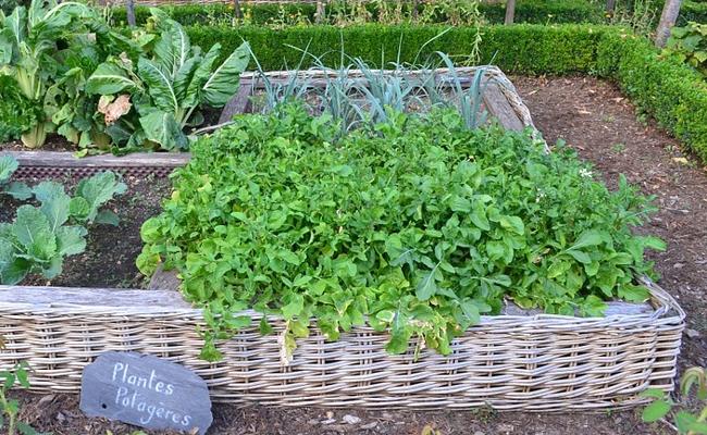 Installer un carr potager pour un mini jardin en ville for Installer un carre potager